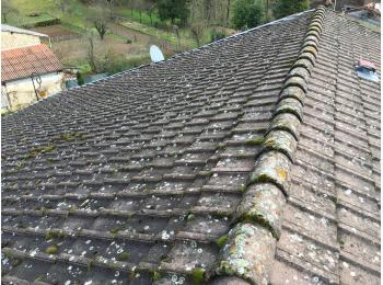 toiture béton mousse lichen